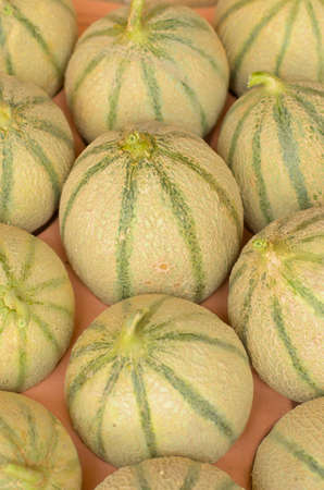 melons in a box Stock Photo - 10226511