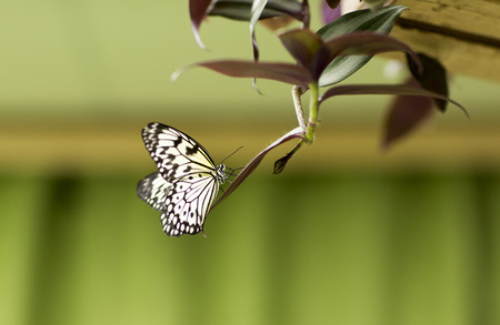 flower of live: Portrait of live butterfly. Black and yellow butterfly on a flower. Stock Photo