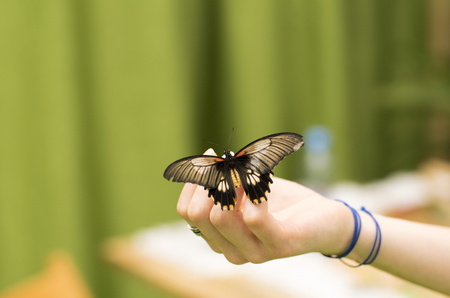flower of live: Portrait of live butterflies. Butterfly sitting on the finger of a man. Stock Photo