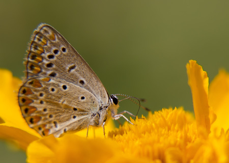 flower of live: Portrait of live butterflies. Butterfly sitting on a flower in nature.