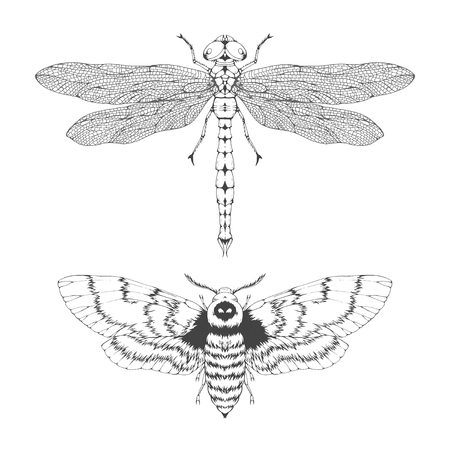 Vector set of hand drawn flying insects. Different insects in realistic style: dragonfly and dead head moth. Collection isolated on white background. Monochrome. Illustration