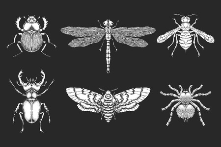 Vector set of hand drawn insects. Different insects in realistic style. Collection isolated white silhouette on black background.