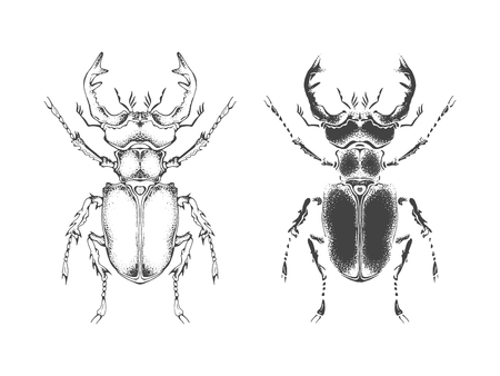 Vector illustration with hand drawn stag beetle. Two variants of insect: outline and silhouette. In realistic style. Isolated on withe background. 矢量图像