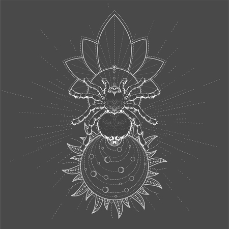 Vector illustration with hand drawn Spider Tarantula and Sacred symbol LOTUS on black background. Abstract mystic sign. White linear shape. For you design, tattoo or magic craft.