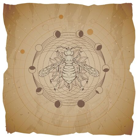 Vector illustration with hand drawn Wasp and Sacred geometric symbol on old paper background with torn edges. Abstract mystic sign. Sepia linear shape. For you design and magic craft. 일러스트
