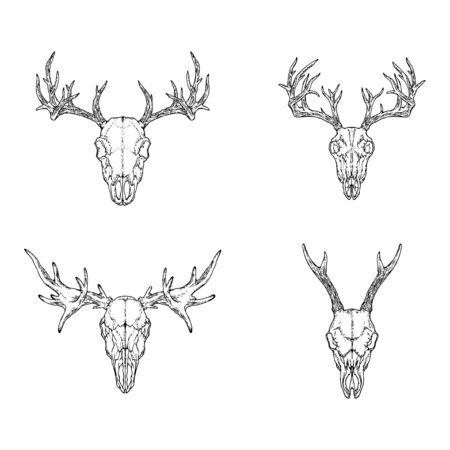 set of hand drawn skulls of horned animals: deer, stag and moose on white background. Sketch illustration. For you design, tattoo or magic craft.