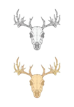 illustration with hand drawn deer skull. Two variants: monochrome and colored. In realistic style. Isolated on withe background. For you design, tattoo or magic craft.