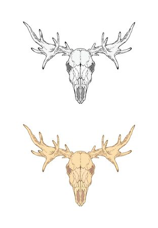 illustration with hand drawn moose skull. Two variants: monochrome and colored. In realistic style. Isolated on withe background. For you design, tattoo or magic craft. Illustration