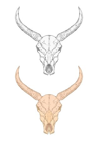 illustration with hand drawn wild buffalo skull. Two variants: monochrome and colored. In realistic style. Isolated on withe background. For you design, tattoo or magic craft. Ilustração
