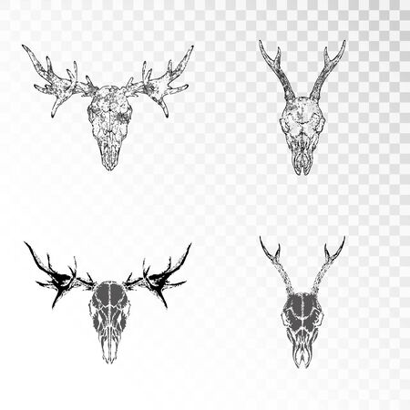 set of hand drawn skulls of roe deer and elk on transparent background. Black silhouettes and contour with grunge texture. For you design, print, tattoo or magic craft.