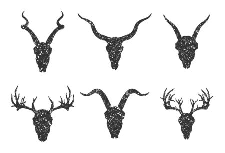 set of six hand drawn skulls of horned animals:  antelopes, deer and goats on white background. Black silhouettes with grunge texture in old sketch and vintage style.  イラスト・ベクター素材
