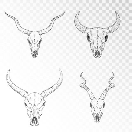 set of hand drawn skulls of horned animals: antelopes, bull and wild buffalo on transparent background. Black linear shape. For you design, print, tattoo or magic craft.