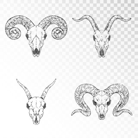 set of hand drawn skulls of horned animals: goats and rams on transparent background. Black linear shape. For you design, print, tattoo or magic craft.