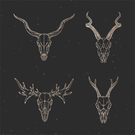 set of four hand drawn skulls of roe deer, antelope and moose on dark background with vintage elements. Sketch in gold color. For you design, print, tattoo or magic craft.