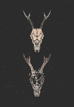 illustration with two variants of hand drawn roe deer skulls on black background. Gold silhouettes and contour with grunge texture. For you design, print, tattoo or magic craft.