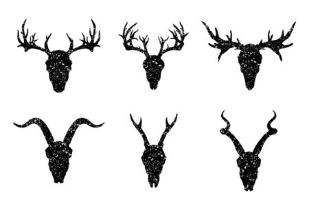Vector set of six hand drawn skulls of horned animals: antelopes, deer and goat on white background. Black silhouettes with grunge texture in old sketch and vintage style. Illustration