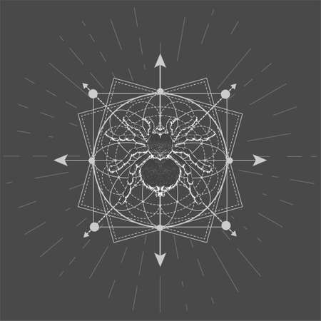 Vector illustration with hand drawn Spider Tarantula and Sacred geometric symbol on black background. Abstract mystic sign. White linear shape. 矢量图像