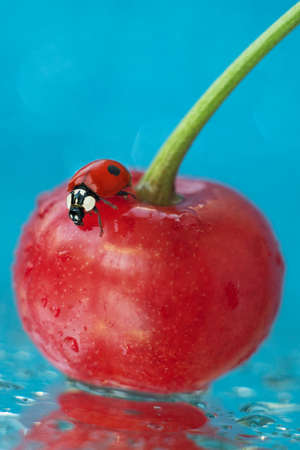 A ladybug crawls over a red cherry