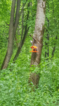 A bright bird feeder hangs on a tree. A woodpecker is sitting next to the feeder. High quality photo