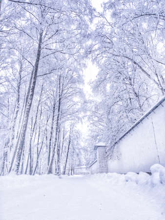 Winter landscape. All the trees are covered with snow