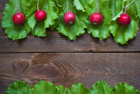 Lettuce and radishes - ingredients for a salad. Free space for text photo