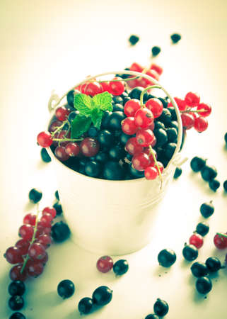 tinting: Black currant and red currants in the little bucket on white. Image tinting,