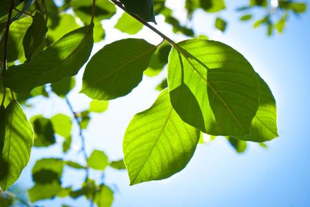 Zelené listy na pobočce na modré obloze za slunečného pozadí