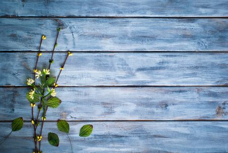 wooden surface: Little green flower at wooden surface. Space for text.