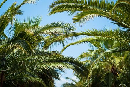 summer trees: Palm trees leaves against the sky. Travel tropical background. Summer vacation holiday. Stock Photo