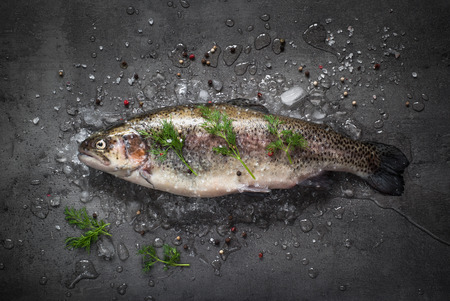 brown trout: Raw brown trout on ice with sea salt,  pepper and ingredients. Fresh fish. Food background.