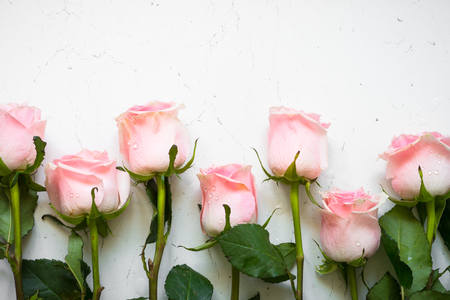 Pink rose at white stone table. Standard-Bild