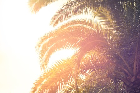 Palm trees leaves against the sky. Toned. Stock Photo