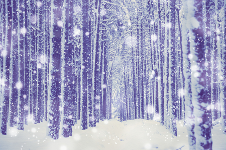 Winter nature background. 免版税图像