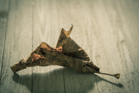 Dry autumn leaf on a porch