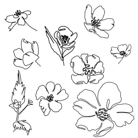 Beautiful hand drawn Line art monoline flowers
