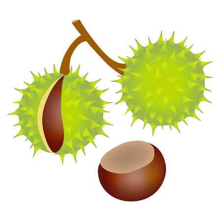 Horse chestnuts isolated on white background, design element.
