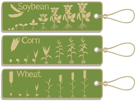 Soy, corn and wheat plant growth cycle tags isolated on white background. Stock Illustratie