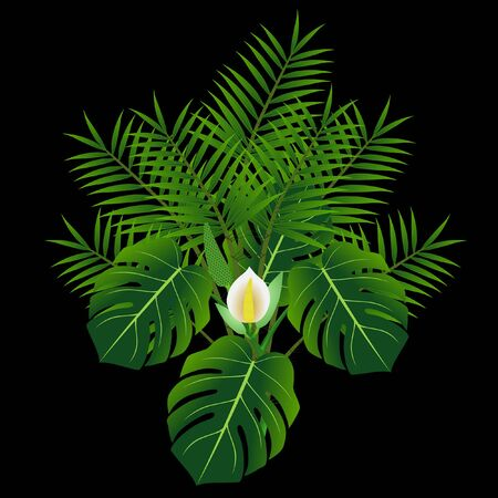 Monstera and tropical palm leaves isolated on black background.