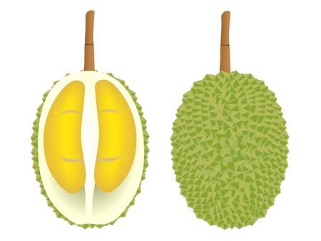 Whole and half durian fruit isolated on white background. Иллюстрация