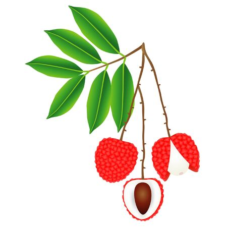 Lychee berries on a branch with leaves on a white background.