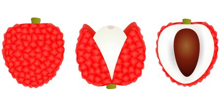 Set fresh lychee the skin is cut, whole, cut in half, with bone isolated on white background. Illustration