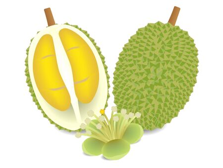 Whole durian and half with flower isolated on white background. Иллюстрация