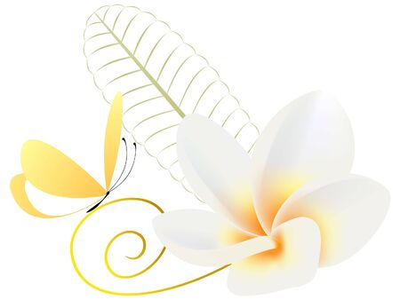 Floral background with flower frangipani (Plumeria) and butterfly.