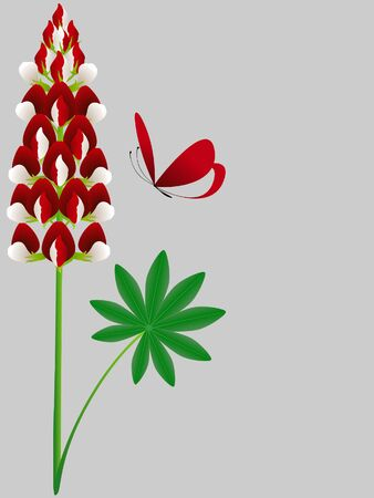 Flower of red lupine with leaves and a butterfly.