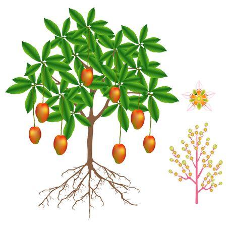 Teil der Mangopflanze isoliert auf weißem Hintergrund. Vektorgrafik