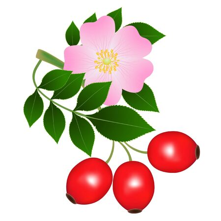 A branch of rose hips with a flower and red berries.