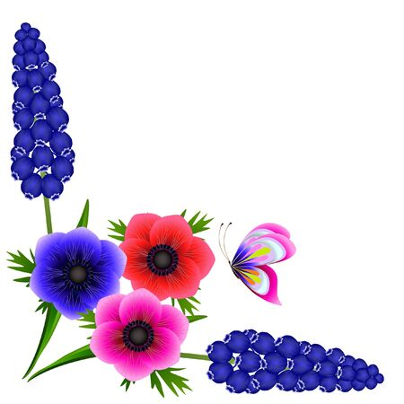 Corner with hyacinths of muscarinic blue grapes and anemones with a butterfly on a white background.