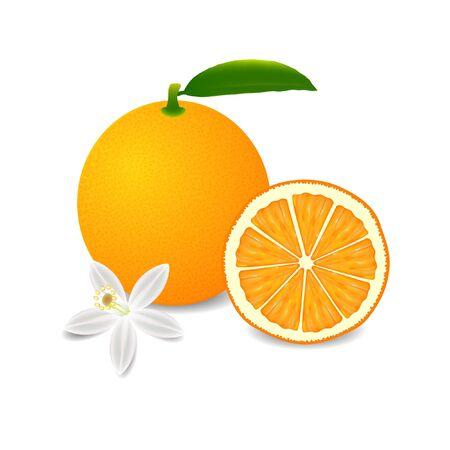 Whole orange fruit with leaf, slice and flower isolated on white background.