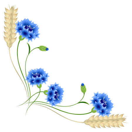 Corner with blue cornflowers and wheat ears on a white background.