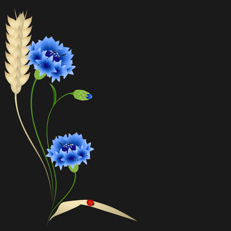 Blue cornflowers and wheat ears with ladybug on a black background.